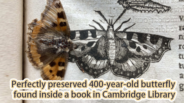 Perfectly preserved 400-year-old butterfly found inside a book in Cambridge Library
