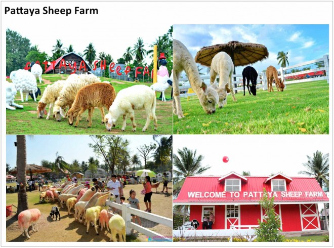 pattaya-sheep-farm-660x490